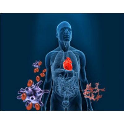 Molecular Diagnostic Assay